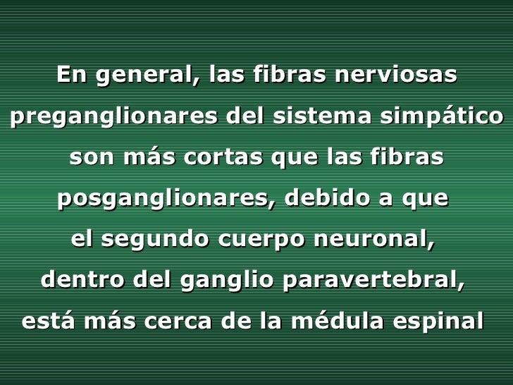 En general, las fibras nerviosas preganglionares del sistema simpático son más cortas que las fibras posganglionares, debi...