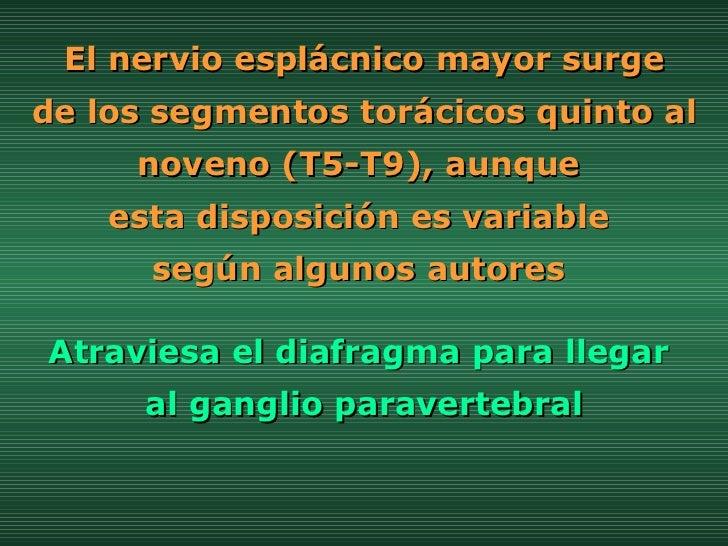 El nervio esplácnico mayor surge  de los segmentos torácicos quinto al noveno (T5-T9), aunque  esta disposición es variabl...