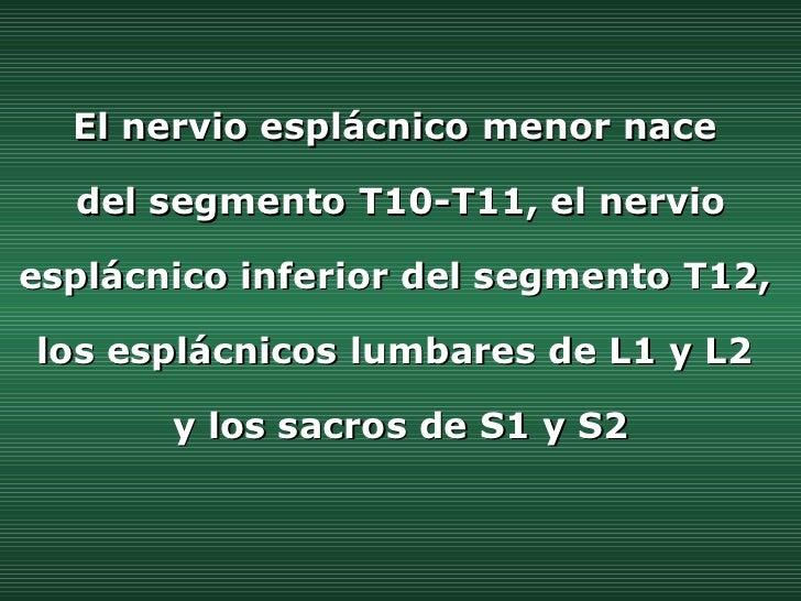 El nervio esplácnico menor nace  del segmento T10-T11, el nervio esplácnico inferior del segmento T12,  los esplácnicos lu...