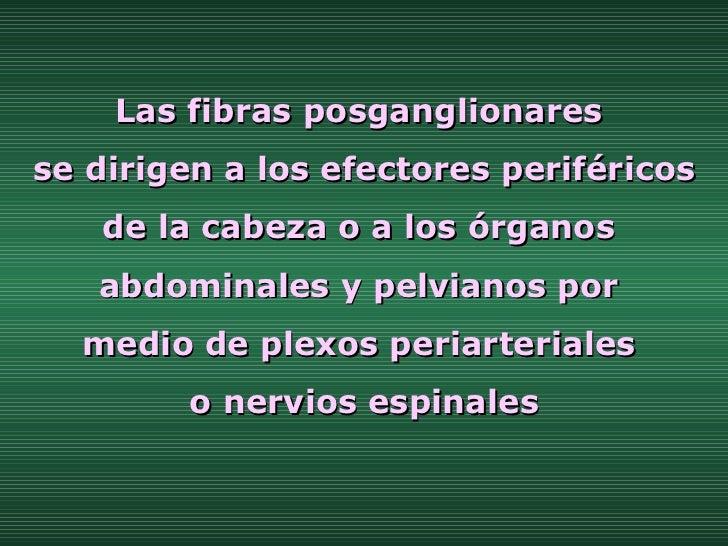 Las fibras posganglionares  se dirigen a los efectores periféricos de la cabeza o a los órganos  abdominales y pelvianos p...