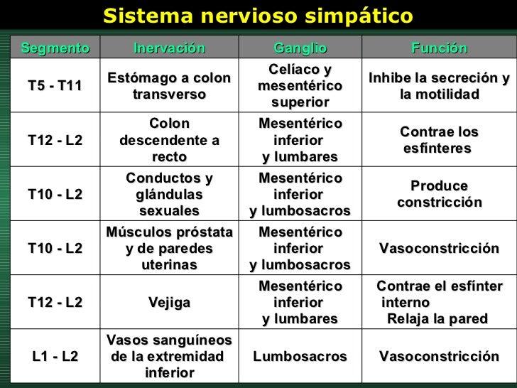 Sistema nervioso simpático Vasoconstricción Lumbosacros Vasos sanguíneos  de la extremidad  inferior L1 - L2 Contrae el es...