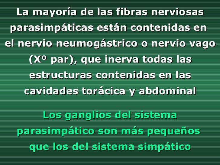 La mayoría de las fibras nerviosas parasimpáticas están contenidas en  el nervio neumogástrico o nervio vago (Xº par), que...