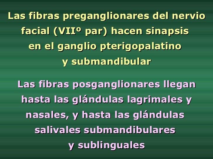 Las fibras preganglionares del nervio facial (VIIº par) hacen sinapsis  en el ganglio pterigopalatino  y submandibular Las...