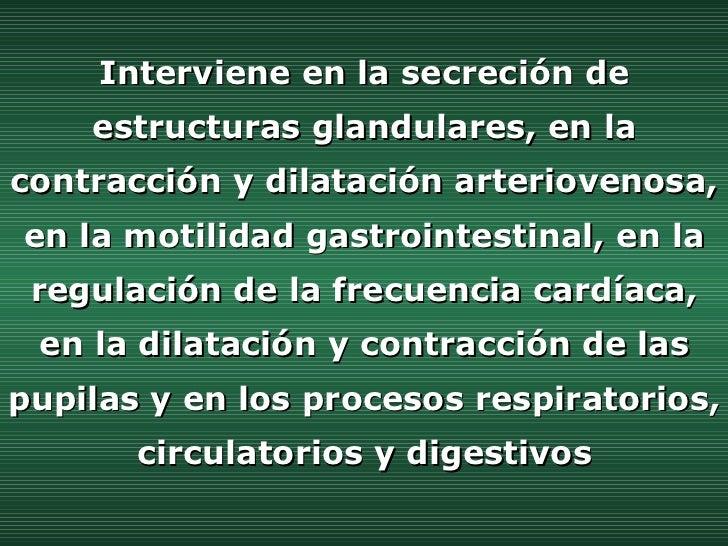 Interviene en la secreción de estructuras glandulares, en la contracción y dilatación arteriovenosa, en la motilidad gastr...