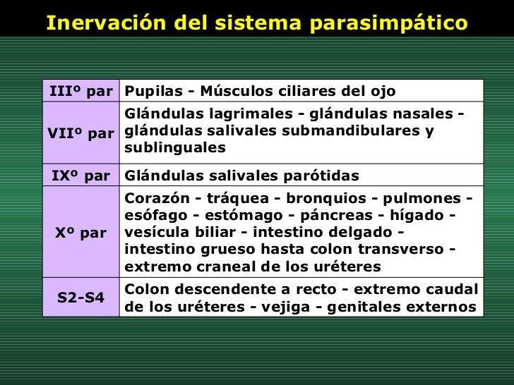 Inervación del sistema parasimpático Colon descendente a recto - extremo caudal de los uréteres - vejiga - genitales exter...