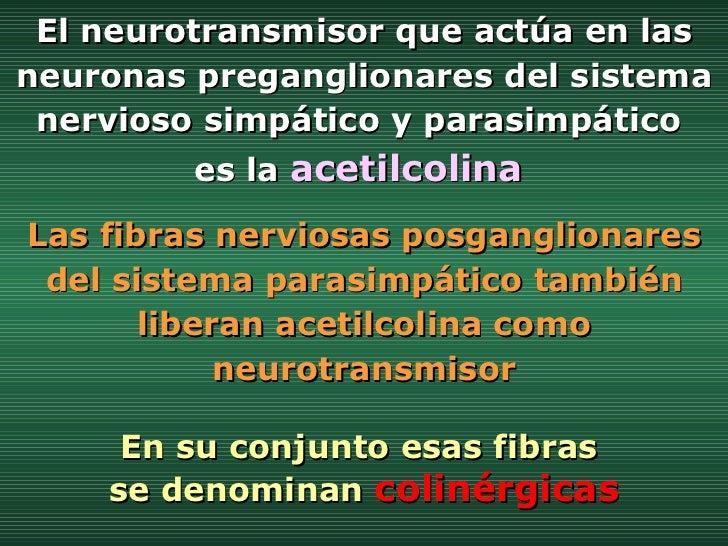 El neurotransmisor que actúa en las neuronas preganglionares del sistema nervioso simpático y parasimpático  es la  acetil...