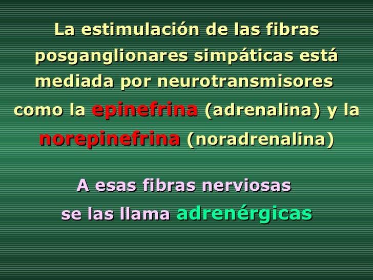 La estimulación de las fibras posganglionares simpáticas está mediada por neurotransmisores  como la  epinefrina  (adrenal...