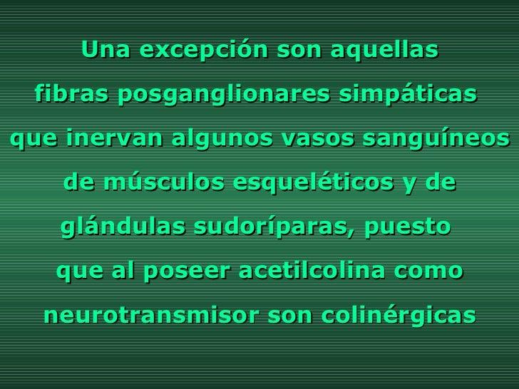Una excepción son aquellas  fibras posganglionares simpáticas  que inervan algunos vasos sanguíneos de músculos esquelétic...
