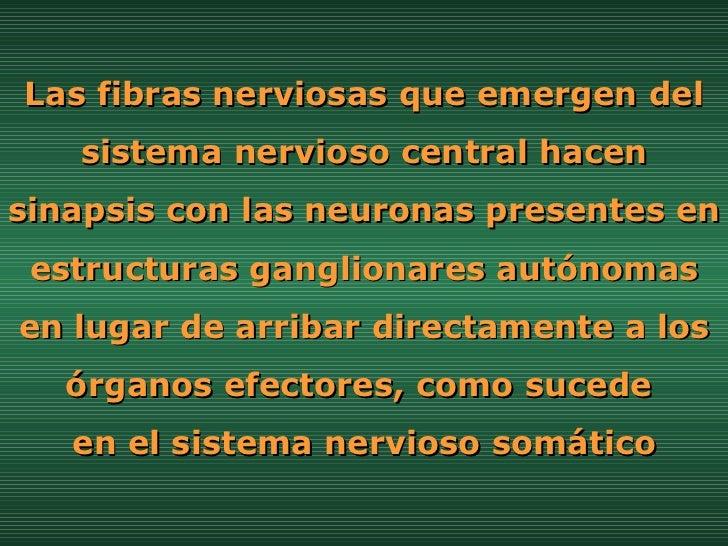 Las fibras nerviosas que emergen del sistema nervioso central hacen sinapsis con las neuronas presentes en estructuras gan...