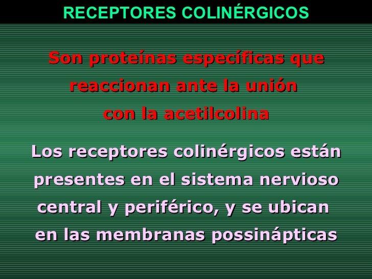 Son proteínas específicas que reaccionan ante la unión  con la acetilcolina Los receptores colinérgicos están presentes en...