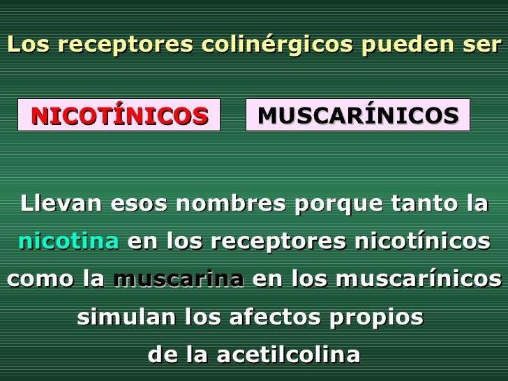 Los receptores colinérgicos pueden ser NICOTÍNICOS MUSCARÍNICOS Llevan esos nombres porque tanto la  nicotina  en los rece...