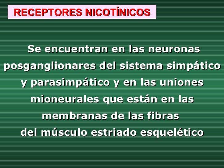 Se encuentran en las neuronas posganglionares del sistema simpático y parasimpático y en las uniones mioneurales que están...