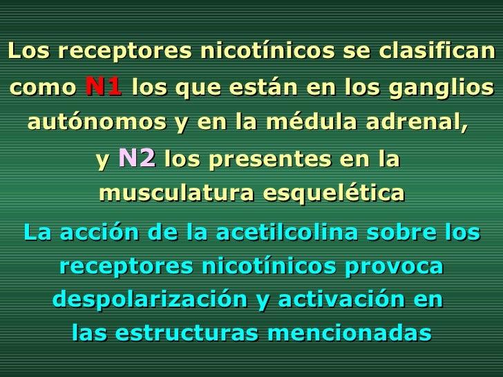Los receptores nicotínicos se clasifican como  N1  los que están en los ganglios autónomos y en la médula adrenal,  y  N2 ...