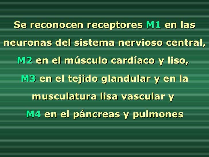 Se reconocen receptores  M1  en las neuronas del sistema nervioso central,  M2  en el músculo cardíaco y liso,  M3  en el ...