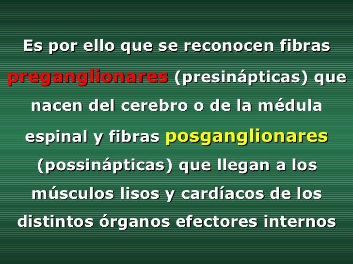 Es por ello que se reconocen fibras   preganglionares   (presinápticas) que nacen del cerebro o de la médula espinal y fib...