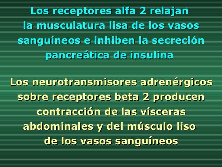 Los receptores alfa 2 relajan  la musculatura lisa de los vasos sanguíneos e inhiben la secreción pancreática de insulina ...