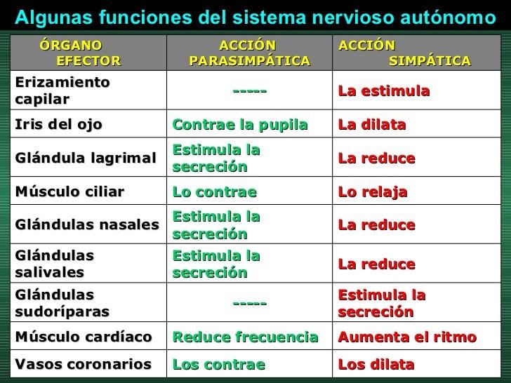 Algunas funciones del sistema nervioso autónomo Los dilata  Los contrae  Vasos coronarios  Aumenta el ritmo  Reduce frecue...