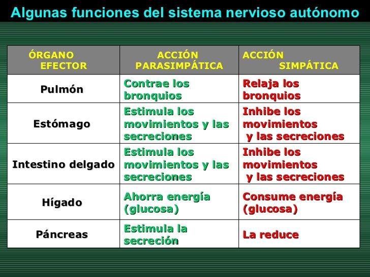 Algunas funciones del sistema nervioso autónomo La reduce  Estimula la secreción  Páncreas  Consume energía (glucosa) Ahor...