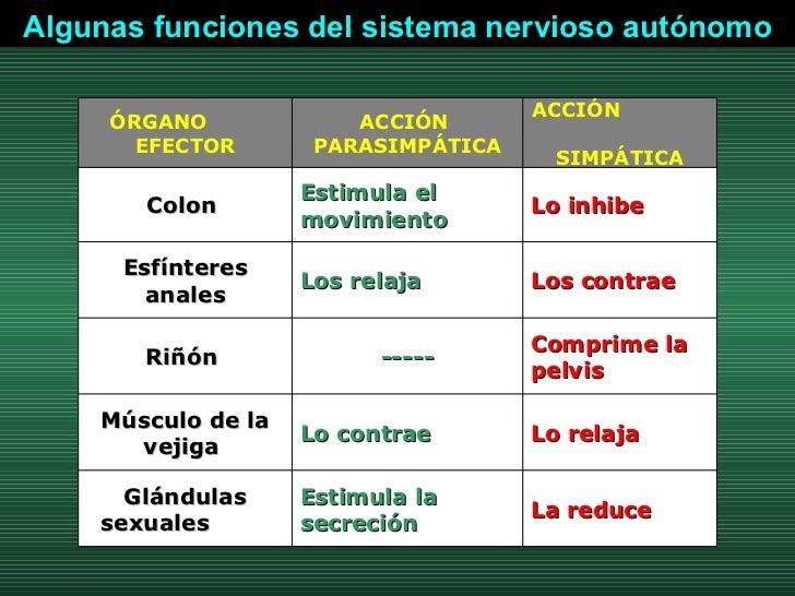 Algunas funciones del sistema nervioso autónomo La reduce Estimula la secreción  Glándulas sexuales  Lo relaja  Lo contrae...
