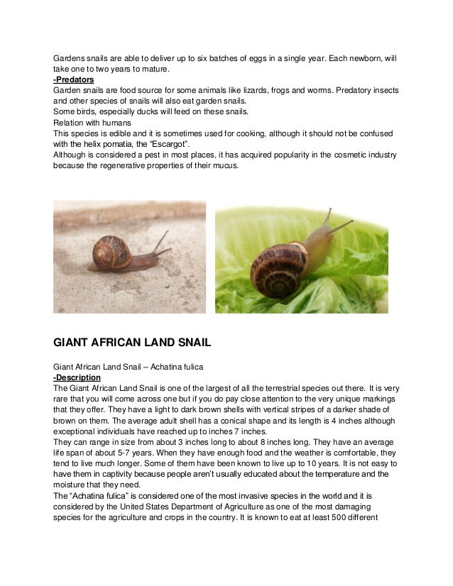 Snails Biology