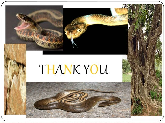 snake by d h lawrence Can you please help me the following are the lines from the poem 'snake' written by dhlawrence and i wished he would come back, my snake.