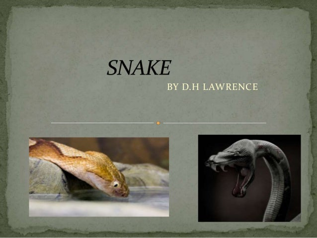 snake by d h lawrence Conclusion 16th stanza ,pettiness the narrator expiates, for his prejudices, his psychological limitations, and then ends up in a tone of repentance and guilt.