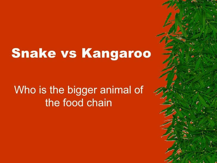 Snake vs Kangaroo Who is the bigger animal of the food chain
