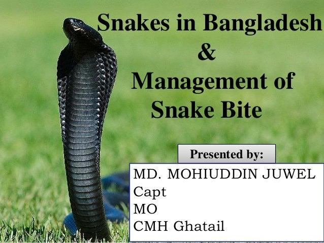 Presented by: MD. MOHIUDDIN JUWEL Capt MO CMH Ghatail Snakes in Bangladesh & Management of Snake Bite