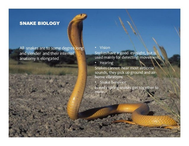 Snake Expect