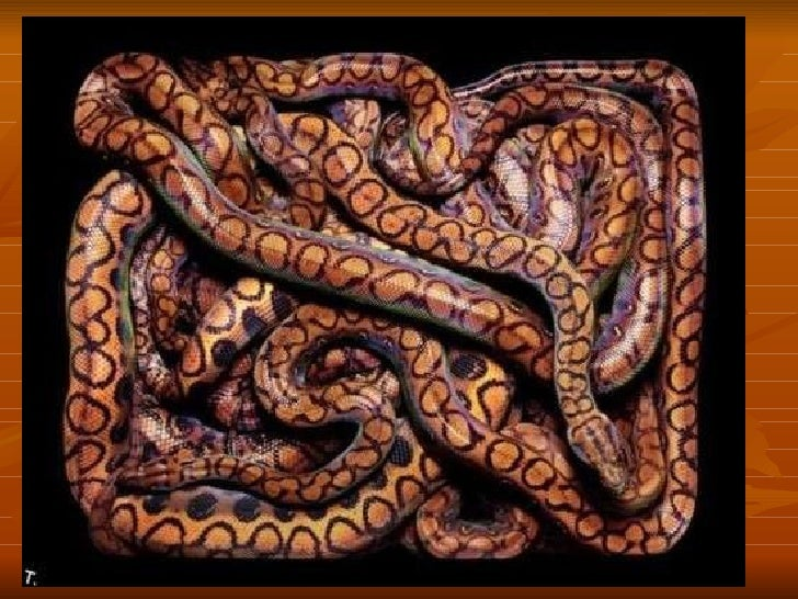 Snake paintings Slide 2