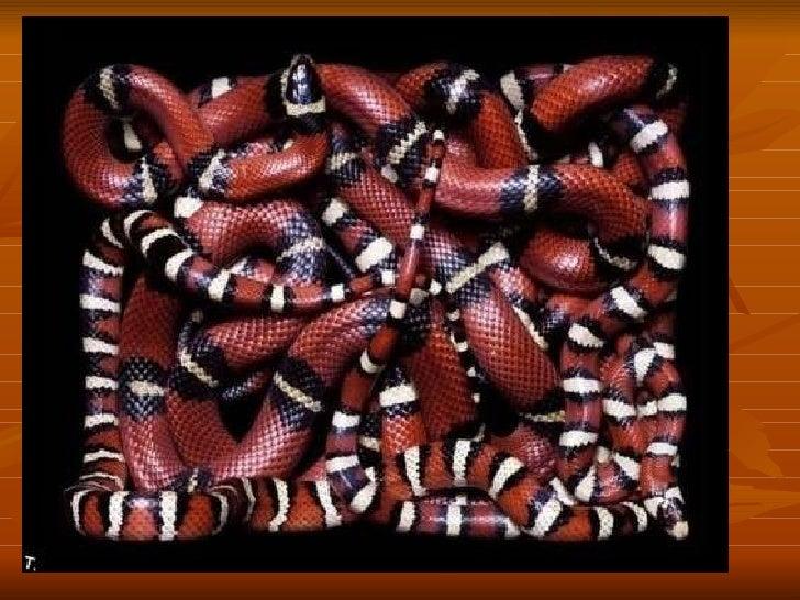 Snake paintings Slide 3