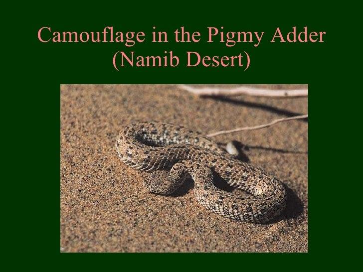 Camouflage in the Pigmy Adder (Namib Desert)