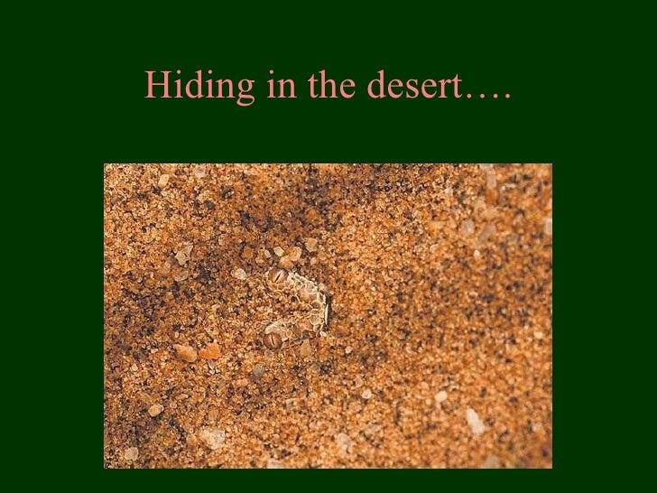 Hiding in the desert….