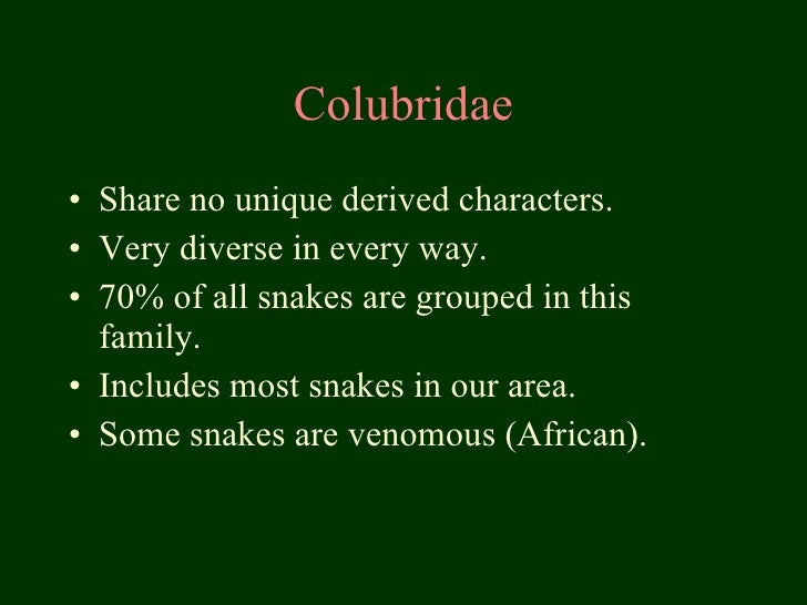Colubridae <ul><li>Share no unique derived characters. </li></ul><ul><li>Very diverse in every way. </li></ul><ul><li>70% ...