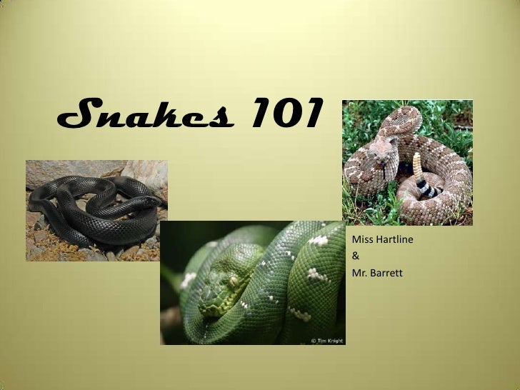 Snakes 101<br />Miss Hartline<br />&<br />Mr. Barrett<br />