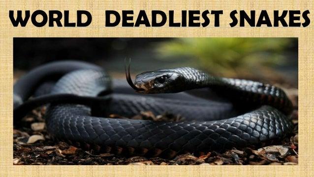 Snakes and snake bites