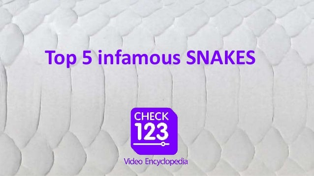 Top 5 infamous SNAKES