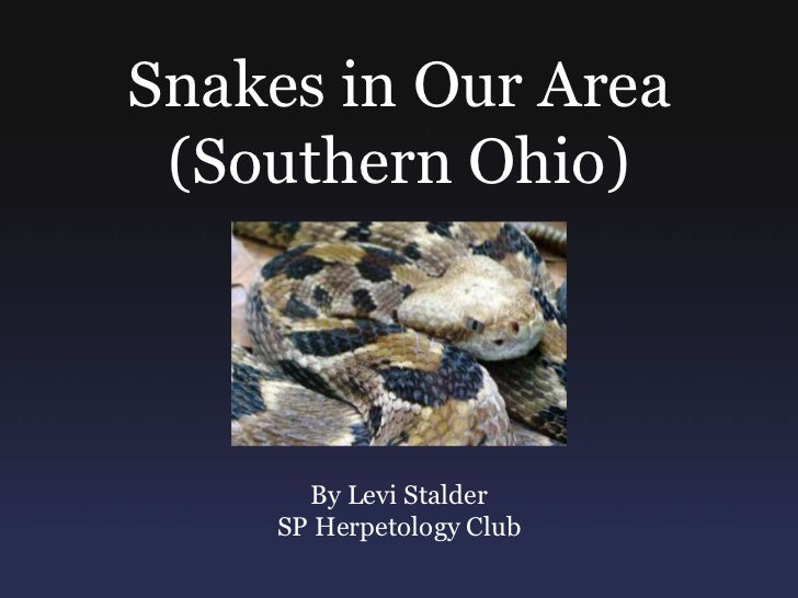 Snakes in Our Area (Southern Ohio)      By Levi Stalder    SP Herpetology Club