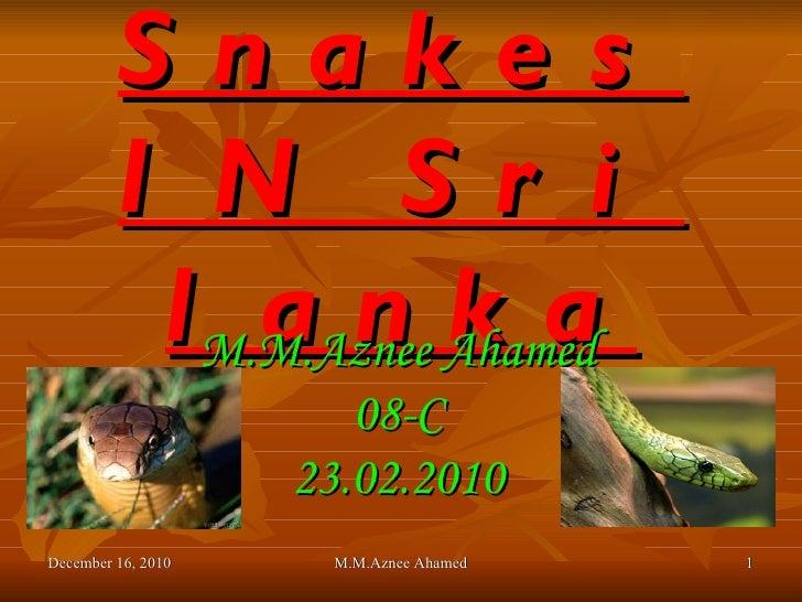 Snakes IN Sri lanka M.M.Aznee Ahamed 08-C 23.02.2010 December 16, 2010 M.M.Aznee Ahamed