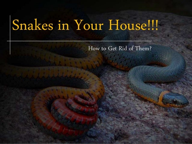 Get Rid Of Snake House Travellin