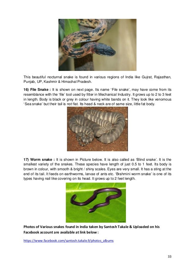 33 This beautiful nocturnal snake is found in various regions of India like Gujrat, Rajasthan, Punjab, UP, Kashmir & Himac...