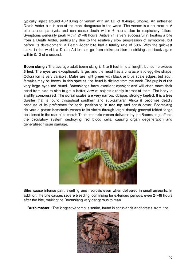 40 typically inject around 40-100mg of venom with an LD of 0.4mg-0.5mg/kg. An untreated Death Adder bite is one of the mos...