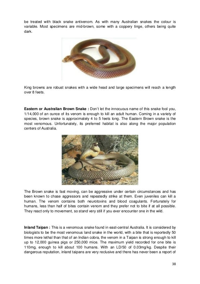 snake information in marathi pdf