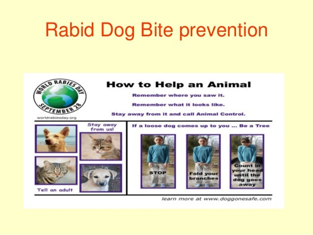 Prevention Of Rabies After Dog Bite