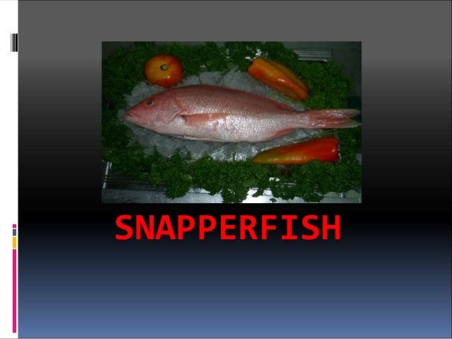 SNAPPERFISH
