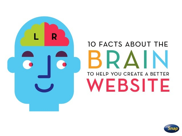 brain 10 facts about the to help you create a better website
