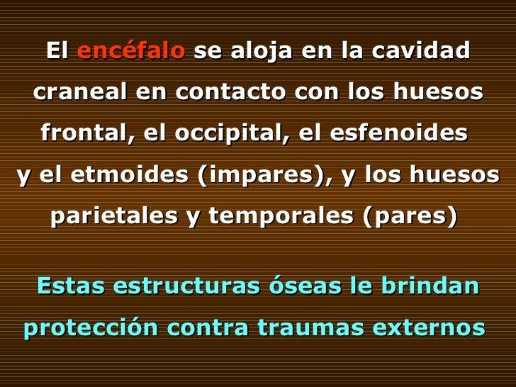 El  encéfalo  se aloja en la cavidad craneal en contacto con los huesos frontal, el occipital, el esfenoides  y el etmoide...