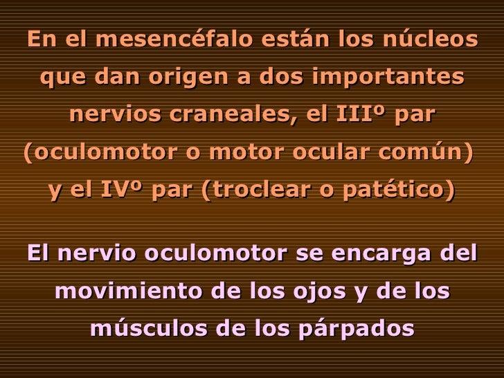 En el mesencéfalo están los núcleos que dan origen a dos importantes nervios craneales, el IIIº par (oculomotor o motor oc...