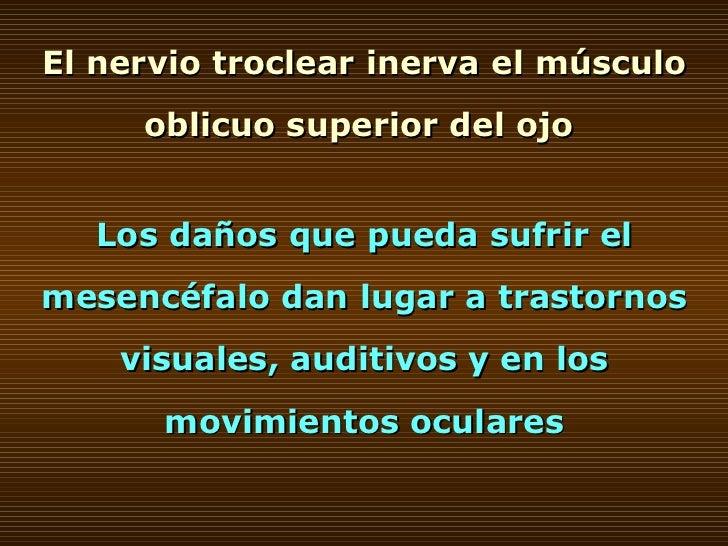 El nervio troclear inerva el músculo oblicuo superior del ojo  Los daños que pueda sufrir el mesencéfalo dan lugar a trast...