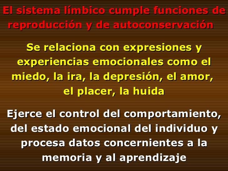 El sistema límbico cumple funciones de reproducción y de autoconservación  Se relaciona con expresiones y experiencias emo...
